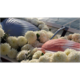Ideas for a water burial using the shell biodegradable pet urn