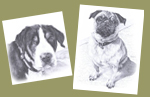 Pet Memorial Portraits