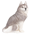 Figurine Dog Urns: Husky Gray & White