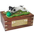 Jack Russell Terrier Ball on Grass