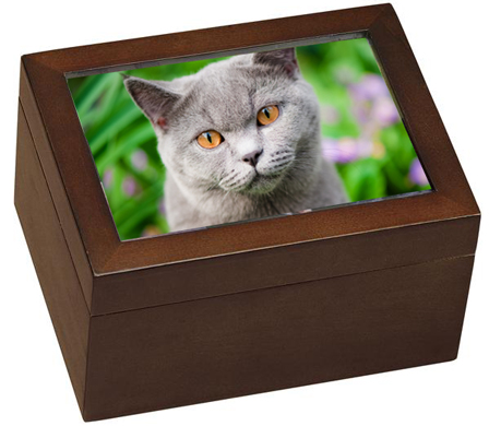 Small Wooden Cat Urn With Photo and Shelf