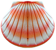 The Shell biodegradable urn in Coral for pets