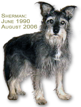 Sherman (the Schnauzer): June 1990 to August 2006