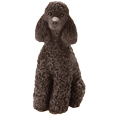 My Companion Keepsake Poodle Black