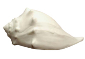 Ocean Spirit Whelk Shell Pet Urn Keepsake