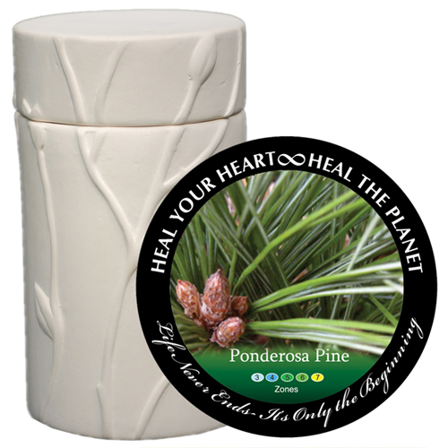 Pet Cremation Urn Memorial Tree- Ponderosa Pine
